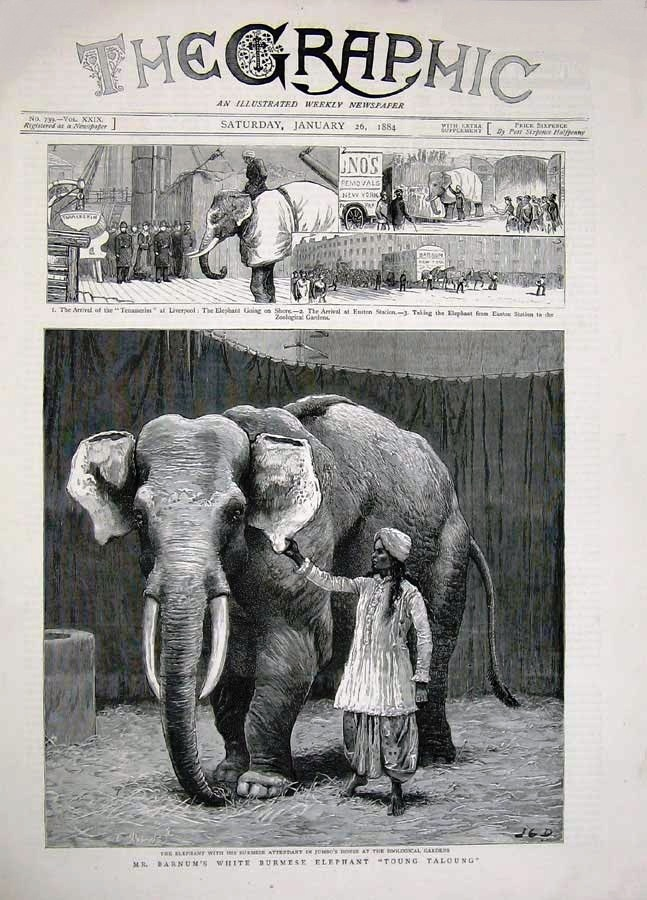 The Graphic newspaper featured Barnum's White Elephant on the cover of its Jan. 26, 1884 issue. Value of this newspaper is $15-20.