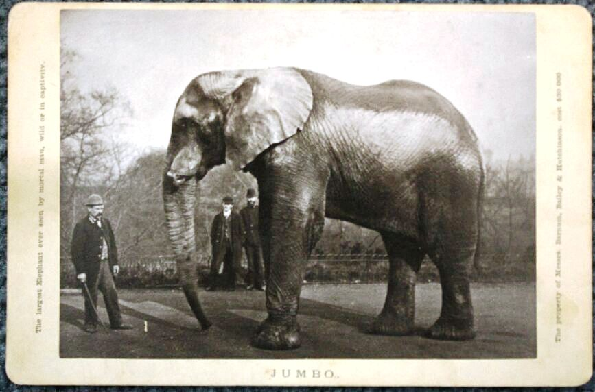 "This Artotype photo of Jumbo the elephant is valued at $50, however this copy of the photo was found in the early years of eBay for only $5. It was advertised simply as ""a large elephant."""